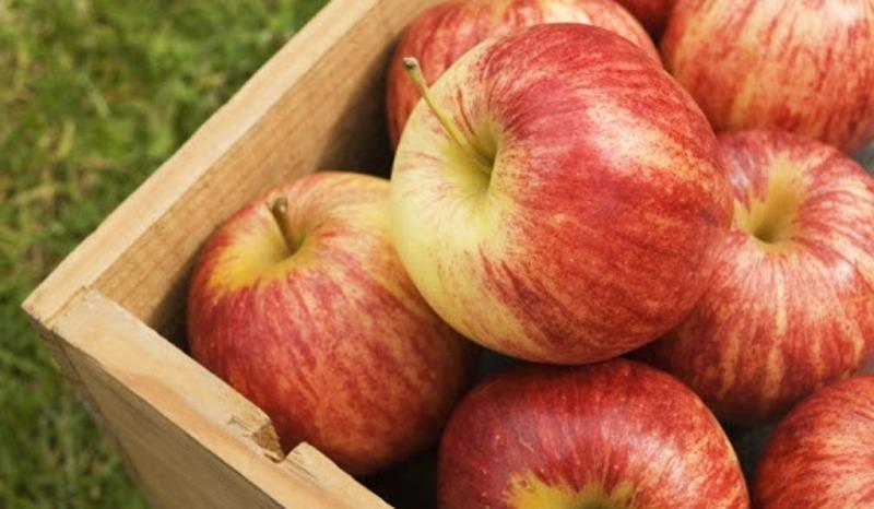 التفاح اللبناني مجدّداً الى الامارات