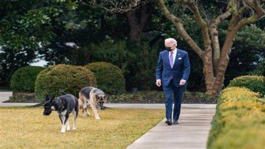 """بايدن ينعى كلبه: """"كان رفيقنا الدائم"""""""